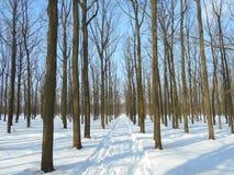 Den snöig vägen i vinter parkerar med träd med stupade sidor Fotografering för Bildbyråer