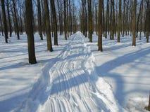 Den snöig vägen i vinter parkerar med träd med stupade sidor Royaltyfria Bilder