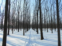 Den snöig vägen i vinter parkerar med träd med stupade sidor Royaltyfri Foto