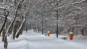 DEN SNÖIG VINTERN I STAD PARKERAR Royaltyfri Foto