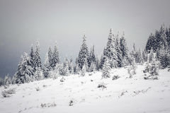 Den snöig vintern landskap arkivbild