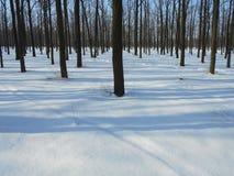 Den snöig vintern parkerar med träd med stupade sidor Royaltyfria Bilder
