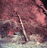 Den snöig vintern parkerar på natten Arkivbild