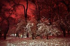 Den snöig vintern parkerar på natten Fotografering för Bildbyråer