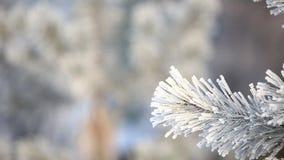 Den snöig vintern sörjer trädet bakgrundsjulen inramninde ferieplats Granfilial som täckas med frostunderland Snow på förgrena si stock video