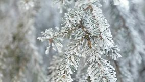 Den snöig vintern sörjer trädet bakgrundsjulen inramninde ferieplats Granfilial som täckas med frostunderland Snow på förgrena si arkivfilmer