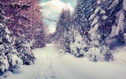 Den snöig vintervägen i skogen täckte ny snö Arkivbilder