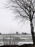 Den sn?ig vintern landskap royaltyfria bilder