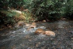 Den snabba bergfloden flödar bredvid den gröna skogen Arkivbilder