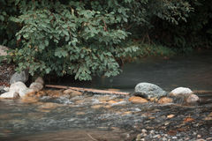 Den snabba bergfloden flödar bredvid den gröna skogen Arkivfoto