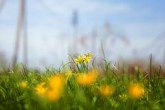 Den sol- blomman står högt över blommafältet Arkivbild