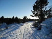 Den soliga dagen för vinter Arkivfoto