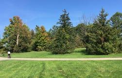 Den soliga dagen parkerar, gör grön lövverk Arkivbilder