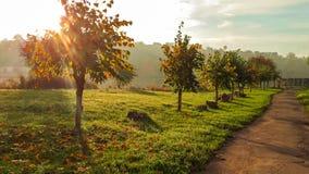 Den soliga morgonen i stad parkerar Fält för grönt gräs med dimmig bakgrund Royaltyfri Bild
