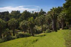 Den soliga palmträdet parkerar Arkivfoton