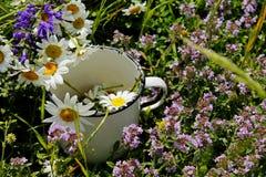 Den soliga sommardagen ligger de lösa medicinska blommorna i en gammal metallisk vit kopp royaltyfri foto