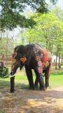 Den Songkran festivalen firas med elefanter i Ayutthaya Royaltyfria Foton