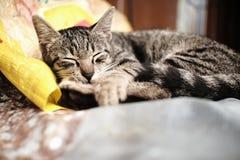 Den sova Cat In A regniga dagen fotografering för bildbyråer