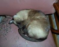 Den sova katten arkivbild