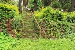 Den spökade trappan fördärvar in av gammal trädgård Arkivbild