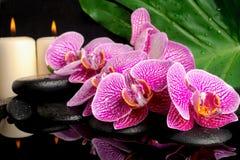 Den Spa inställningen av att blomma fattar den avrivna violetta orkidén Royaltyfria Foton