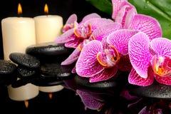 Den Spa inställningen av att blomma fattar den avrivna violetta orkidén Royaltyfria Bilder