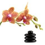 Den Spa stenar och orkidén blommar över vit Royaltyfria Bilder