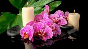 Den Spa uppsättningen av zenstenar med droppar som blommar fattar avrivet Fotografering för Bildbyråer