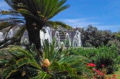 Den Spanien trädgården med blomningsago gömma i handflatan, Cycasrevolutaen och springbrunnen royaltyfria foton