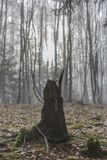 Den spektakulära bilden av en stubbe av ett träd med dess rotar synligt med torra sidor på jordningen i för arkivbilder