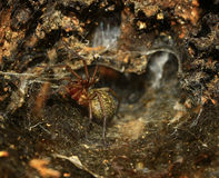Den of a spider Royalty Free Stock Image