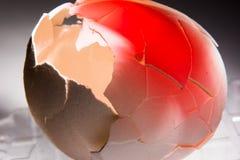 Den spruckna äggskalet fodrade med rött, begrepp mot abort och dålig inställning till djur Arkivfoton