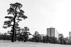 Den stads- skogen - Tokyo - staden och träd möter royaltyfria bilder