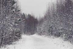 Den stads- vintern parkerar med snö täckte träd och buskar royaltyfri foto