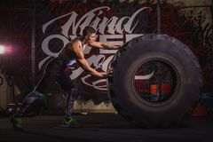 Den starka grabben rullar för honom ett enormt tungt rubber hjul Inomhus i idrottshallen royaltyfria foton