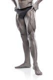 Den starka idrotts- Torso för mankonditionmodellen visningen lägger benen på ryggen Arkivfoto