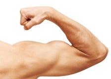 Den starka manliga armen visar biceps som isoleras på vit Arkivfoto