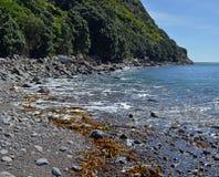 Den steniga shorelinen av fristaden för Kapiti öfågel, Nya Zeeland Royaltyfri Fotografi