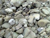 Den steniga stranden av Massalubrense Arkivfoton