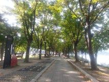 Den stenlade fot- vägen eller går vägen med träd på sidor för allmänhet går royaltyfri foto