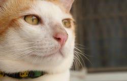 Den stiliga katten har leendeframsidan och tänker av något royaltyfri fotografi