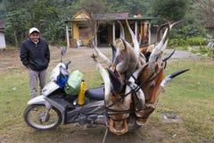 Den stolta vietnamesiska mannen som poserar bredvid hans sparkcykel, laddade med buffelhorntroféer arkivbilder