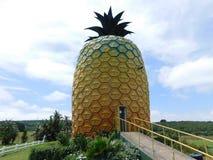 Den stora ananans Royaltyfri Bild
