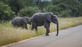 Den stora elefanten med barn behandla som ett barn elefanten i kruger parkerar Royaltyfria Bilder