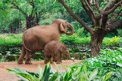 Den stora elefantmodern och små behandla som ett barn Royaltyfria Foton
