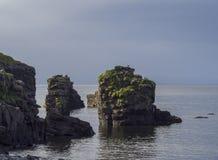 Den stora fågelklippan vaggar i Atlantic Ocean med seagulls och backgound för gräs, för havet och för blå himmel, guld- timmeljus Royaltyfri Bild