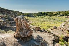 Den stora förstenade stubben förbiser dalen arkivbilder
