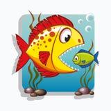 Den stora fisken äter den lilla fisken äganderätt för home tangent för affärsidé som guld- ner skyen till Arkivfoton