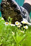 Den stora foten kommer till blommor Arkivfoto