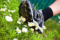 Den stora foten kommer till blommor Royaltyfri Fotografi
